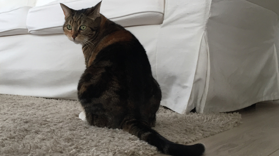 enlever l 39 odeur d 39 urine de chat que faire pour chasser. Black Bedroom Furniture Sets. Home Design Ideas